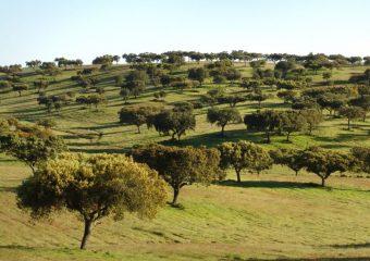 Iberian Forest Fund