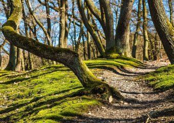 Primeiro Fundo Floresta Atlântica